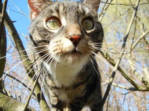 Gartenimpressionen mit Katze im idyllischen Ateliergarten der Kunstschule Frankfurt Atelier Irene Schuh