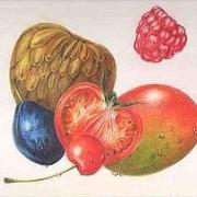 Buntstiftzeichnung, Illustrationzeichnen-lernen,Zeichenschule-Frankfurt-Atelier-Irene-Schuh