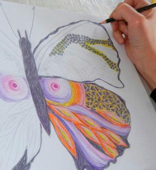 Eine Schmetterlingsillustration entsteht im Zeichenkurs Malen in der Natur der Kunstschule Frankfurt Atelier Irene Schuh