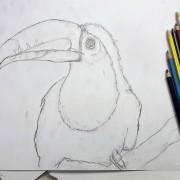 Einen Vogel zeichnen lernen in der Kunstschule Frankfurt Atelier Irene Schuh